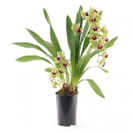 bloeiende plant