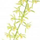 Detail bloem