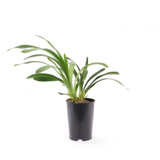 Jonge plant