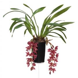 Karina, bloeiende plant