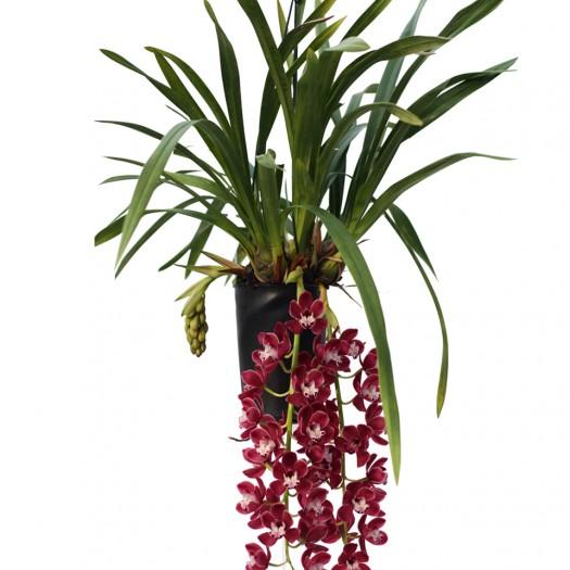 Prem bloeiende plant