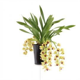 Winn, bloeiende plant