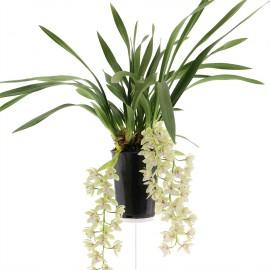Usko, bloeiende plant