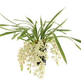 Thana, bloeiende plant