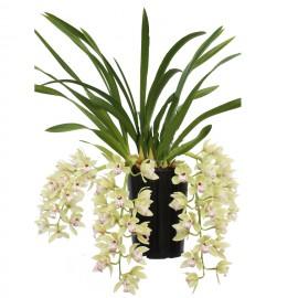 Harwin, bloeiende plant